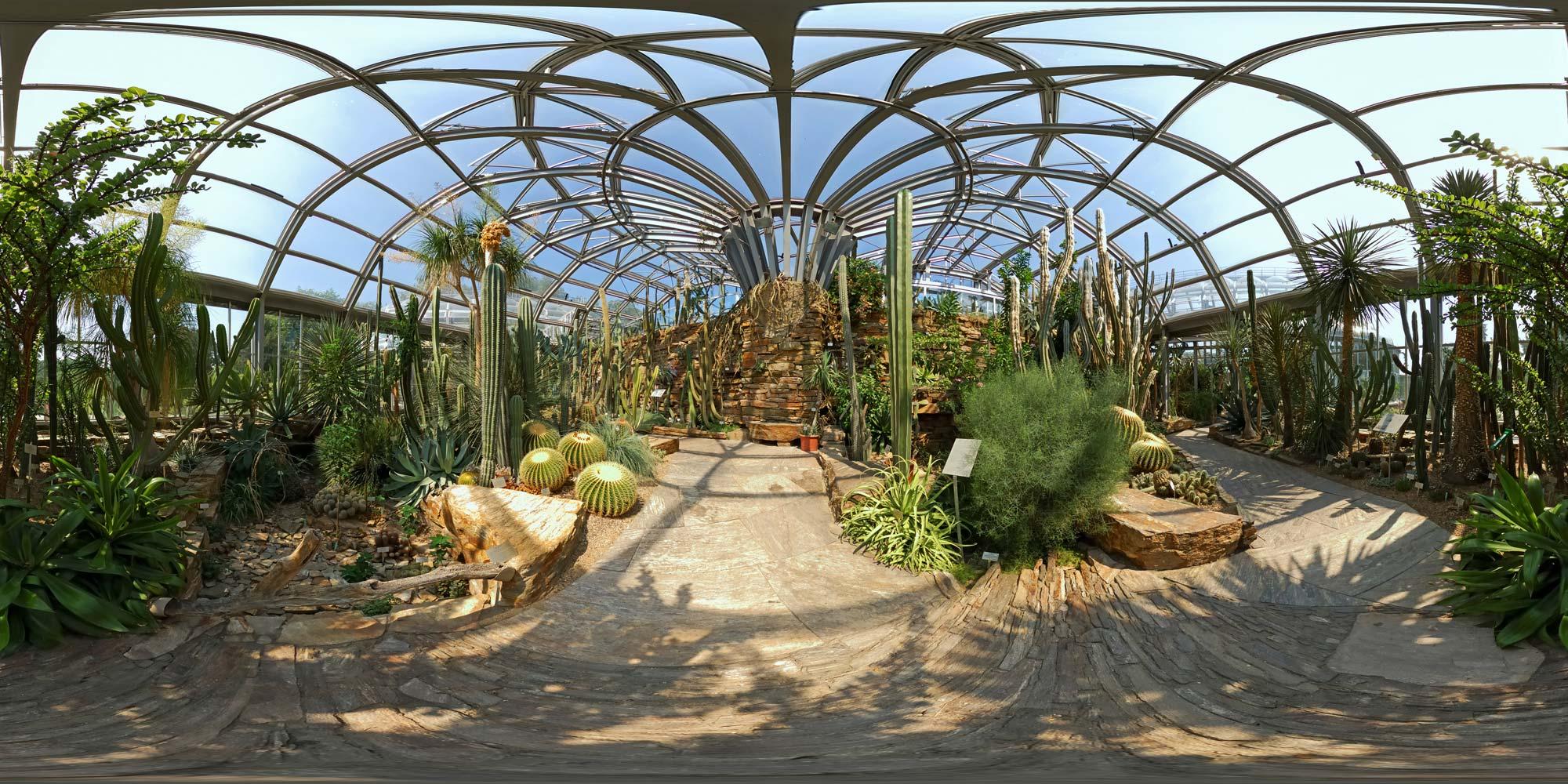 Kubische Panoramen - Panorama-Foto: Botanischer Garten - Kakteen 2